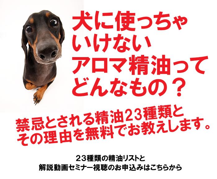 犬に禁忌な精油